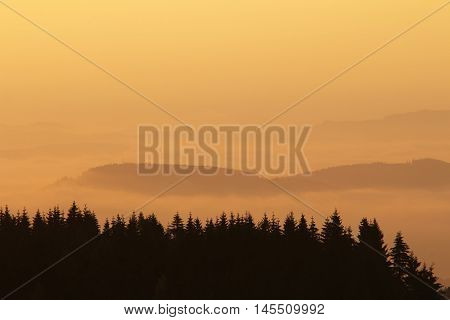 Forested hills in early morning mist and light