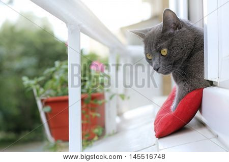 the cat watching what is happening on the street from the open window of her cozy balcony / resting after a meal