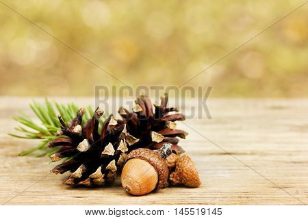 Autumn background with pine cones and oak acorns on wooden board against bokeh backdrop, fall concept.