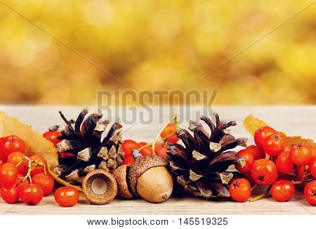 Pine cones, oak acorn and rowanberry on wooden board against bokeh background. Autumn concept.