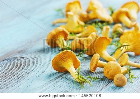 Yellow chanterelle or cantharellus cibarius forest mushrooms  on a rustic wooden background. Copy space for text.