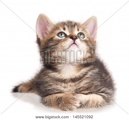 Serious cute kitten isolated on white background cutout