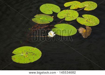 Finnish Summer Lake