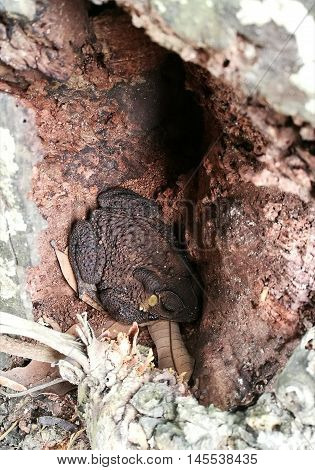 Toad sleeping on natural cave in tropical jungle