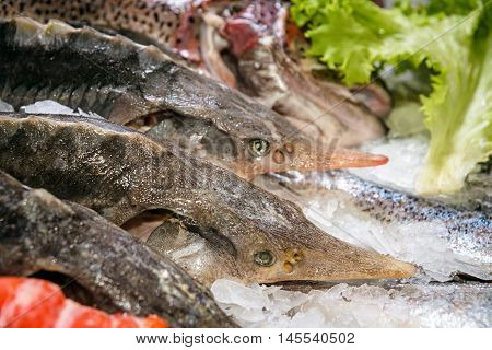 sturgeon raw, not cooked fish, lying in the ice on the counter in the supermarket. Fresh fish