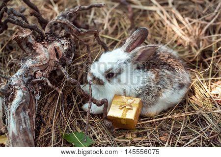 Cute Rabbit And Gift Box