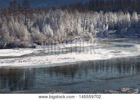 Frosty autumn morning with frosted trees in South Yakutia Russia