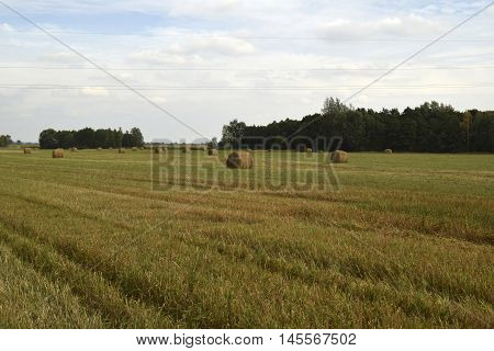 Agricultural field. The crop is reaped. On the agricultural field there was a straw. Straw is pressed in bales. Bales are round, heavy.