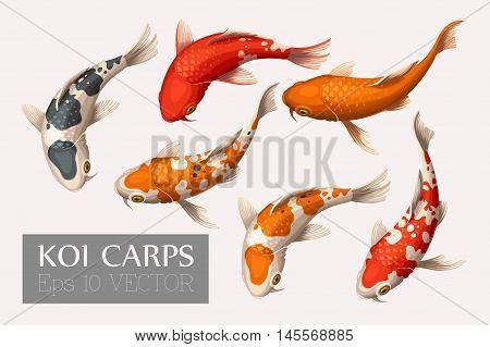 Vector set of beautiful and colorful koi carps