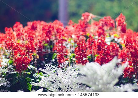 Dnipropetrovsk city flowerbed with beautiful red flowers at night