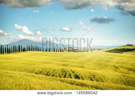 Beautiful tuscan landscape view with cypress alley in Italy
