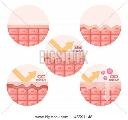 cc , bb , dd cream and skin anatomy vector , icon and logo