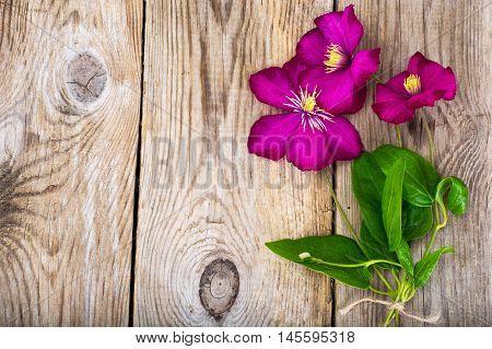 Purple Clematis Flower on Wooden Rustic Background Studio Photo