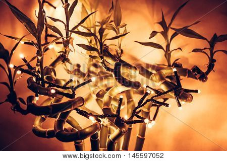 christmas  lights on tropical bamboo tree with orange background