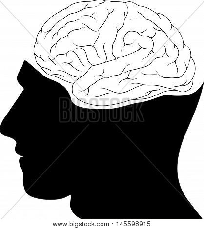 Human silhouette head and brain wiev vector