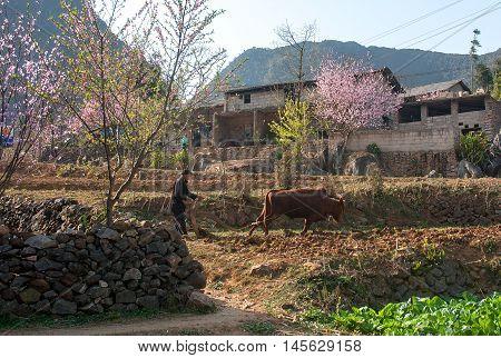 HA GIANG, VIET NAM, March 19, 2016 Hmong farmers, highland ha Giang, Vietnam, plowing corn, spring