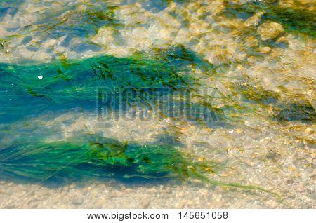 Slime Water