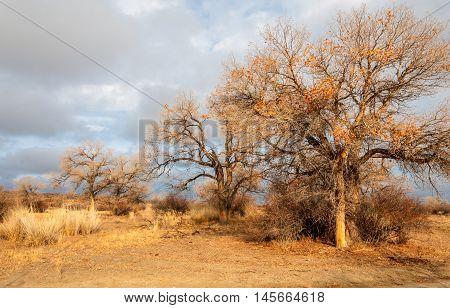 Near Desert.  Desert.  Steppe.