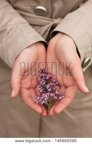 Woman's hand tenderly holding bench of lilac. Flower in hands.