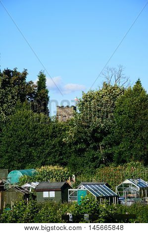 ARMITAGE, UNITED KINGDOM - AUGUST 8, 2016 - Greenhouses and vegetable crops on allotments with a church tower to the rear Armitage Staffordshire England UK Western Europe, August 8, 2016.