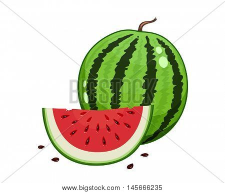 Watermelon and slice. Vector illustration. Vegetarian organic sweet food. Juicy natural healthy Stripy big round fruit. Isolated white background
