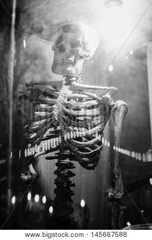 medical skeleton model with light in showcaseblack and white color picture style