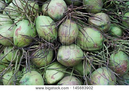 close up a group of green coconut fruit, nature color picture style, texture of coconut, coconut background