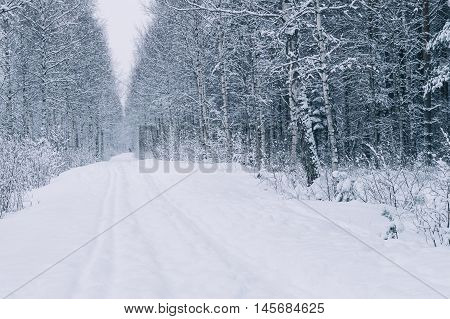 Empty countryside road in birch tree forest after snowstorm winter-time landscape