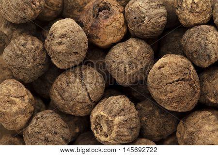 Organic treated Teak seed (Techtona Grandis). Macro close up background texture. Top view.