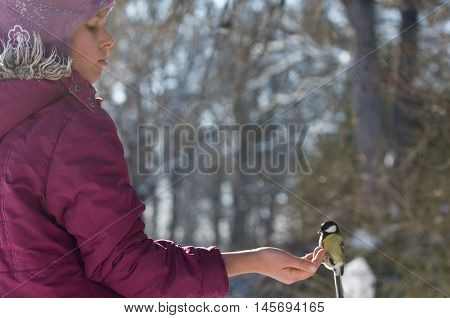 Tit sits on one's hand. Girl feeds the bird.