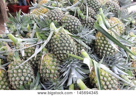 A Lot Of Pineapple Fruit In A Farm
