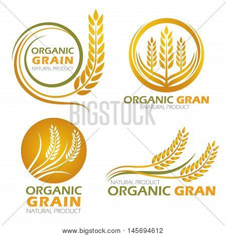 Gold circle paddy rice organic grain products and healthy food banner sign vector set design