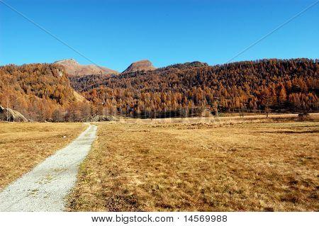 Path Crossing A Field