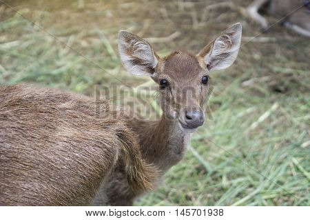 cute shot of a deer looked at camera and smile, deer smile, light effect added, selective focus