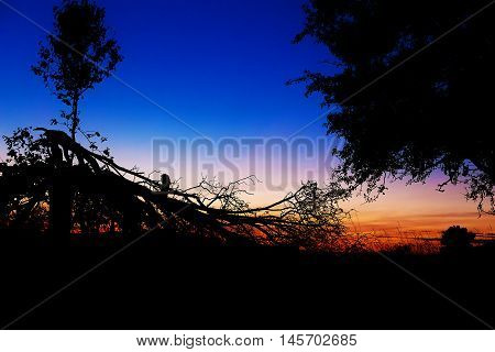 beautiful scenery of setting sun with dark silhouettes of man on tree branches