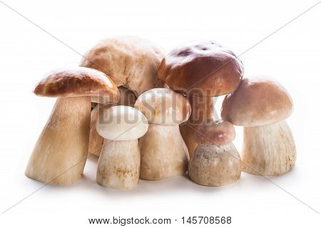 Group of fresh ceps isolated on white background