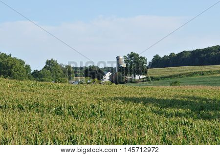 Corn fields and farm with silo in rural Lancaster Pennsylvania