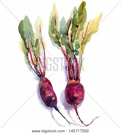 Beet, beetroot with leaves isolated, watercolor painting on white background