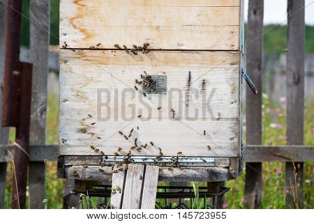A row of bee hives in a field. The beekeeper in the field of flowers. Hives in apiary with bees flying to the landing boards in a green garden. hives with bees.