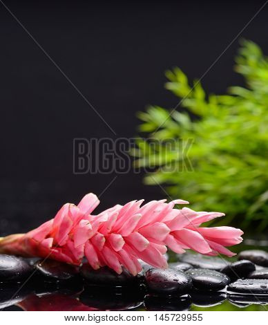 Still life with ginger flower with plant leaf with therapy stones