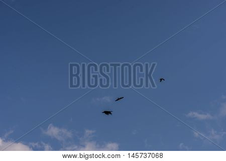 Red Hawk, Brahminy kite (Haliastur indus) flying on sky in Bang Chan, Khlung, Chanthaburi, Thailand