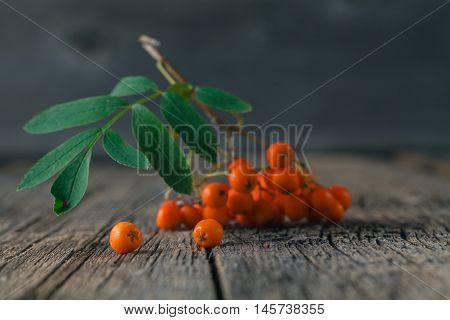 Rowanberry with leaf on the wooden table