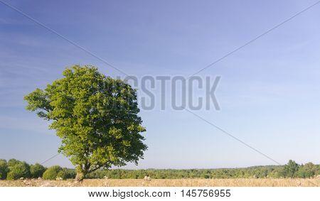 Plain Nature Field Freedom