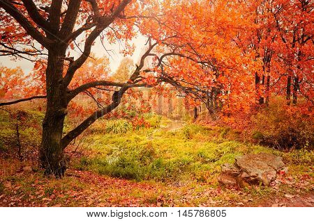 Picturesque autumn nature. Forest colorful autumn view with bright autumn trees in cloudy autumn weather. Autumn foggy landscape with old yellowed autumn oak trees near the dry creek. Soft focus applied.