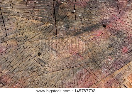 log that is used for chopping wood closeup