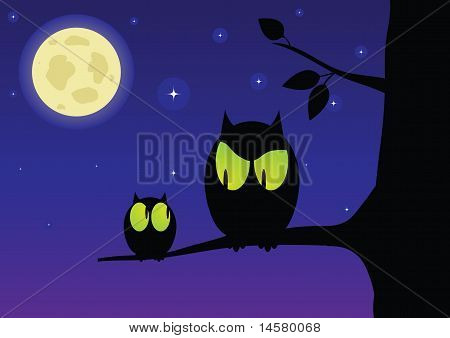 The owl and owlet