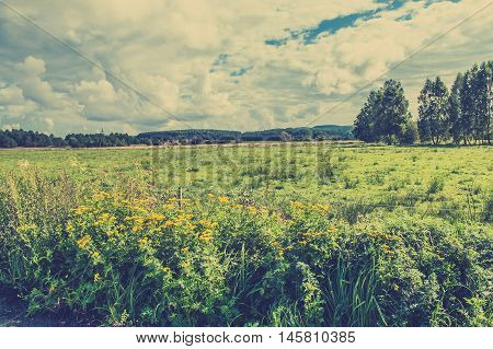 Beautiful rural scene of pasture and forest in autumn, vintage photo, landscape, Poland