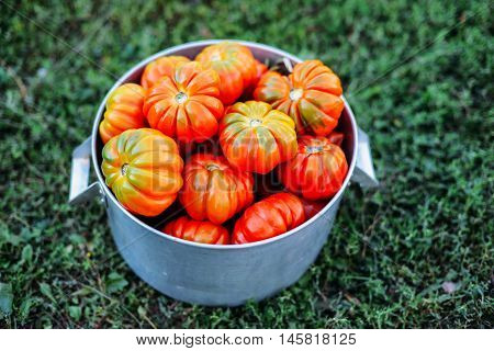 Assorted Tomatoes In Brown Paper Bags. Various Tomatoes In Bowl.