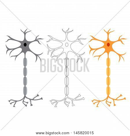 nerve cells neurons, isolated on white background