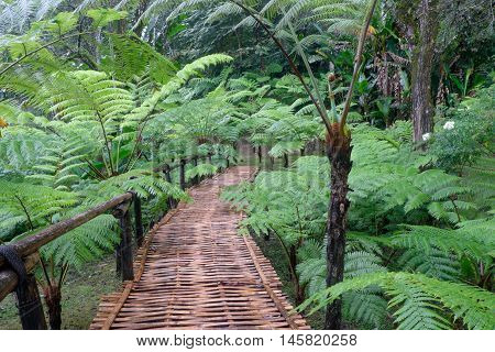 the wood bridge in the middle of fern garden